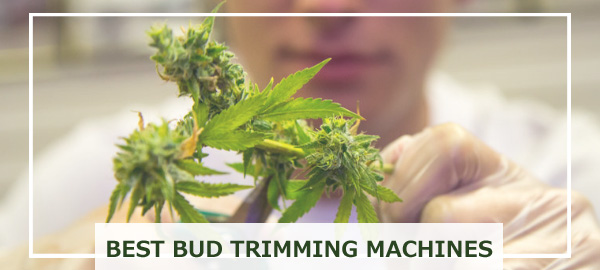 Best Marijuana Trimmer & Scissors