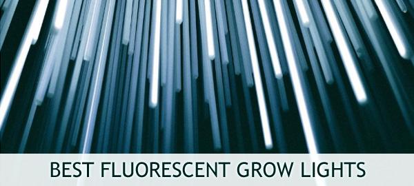 Best Fluorescent Grow Lights