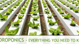 Hydroponics Questions & Answers
