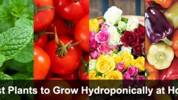 Best Plants to Grow Hydroponically