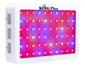 King Plus 600w LED Review
